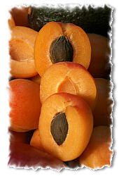 picture of apricots